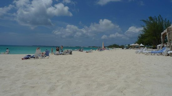 The Westin Grand Cayman Seven Mile Beach Resort & Spa: Beach is bare: no shade!