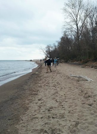 Point Pelee National Park: The beach at The Tip