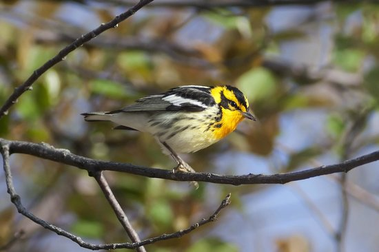 Point Pelee National Park: Birds found in the Park
