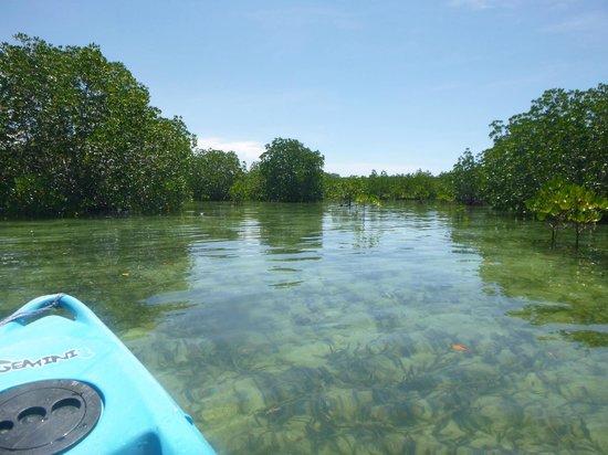 Dos Palmas Island Resort & Spa: Kayaking in mangroves around island