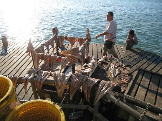 New Market: Fish produce drying in the sun
