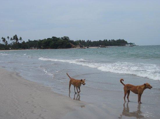 Trinco Blu by Cinnamon: The beach itself