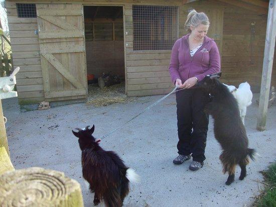 Kionslieu Farm Cottages: Taking the goats for a walk