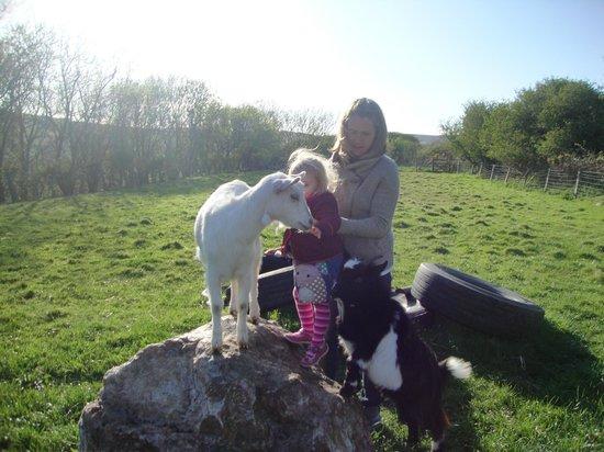 Kionslieu Farm Cottages: The friendly goats