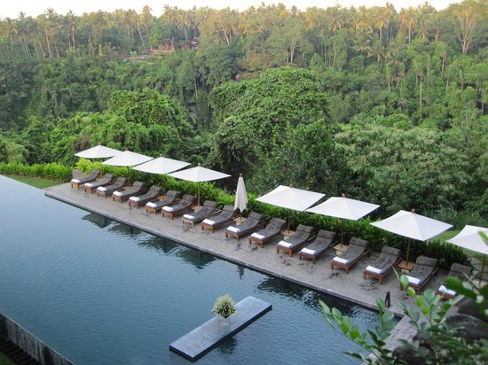 Alila Ubud: Beautiful outlook to the forest with lots of birdlife and monkeys