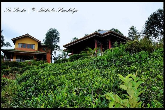 View Point Villa: rooms among the tea rally