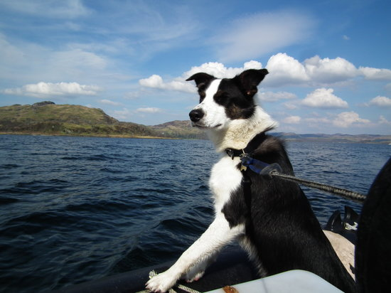 Torsa Island, UK: Gets the dogs seal of approval
