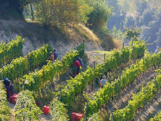 Cascina Sant'Eufemia: The Grape Harvest