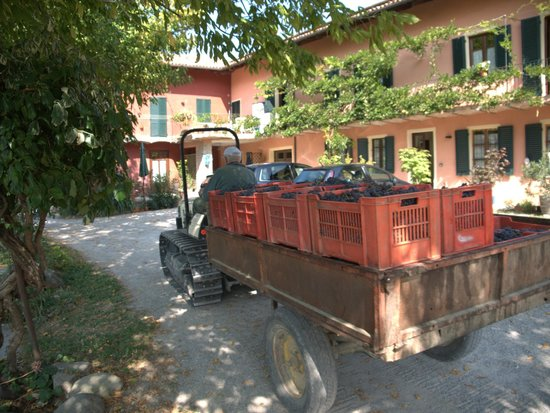 Cascina Sant'Eufemia: Time to Make Wine