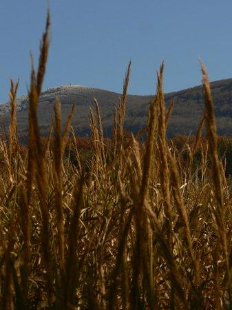Thalassa Locanda - B&B: Il Monte Amiata