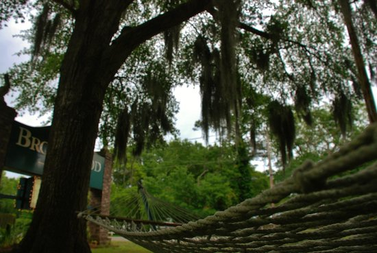 Brookwood Motel: Moss-Draped Majestic Oak Trees