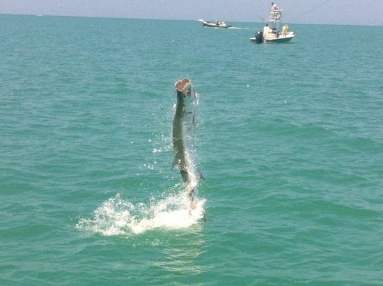 FishSkinner Charters: Capt timed the jump perfectly