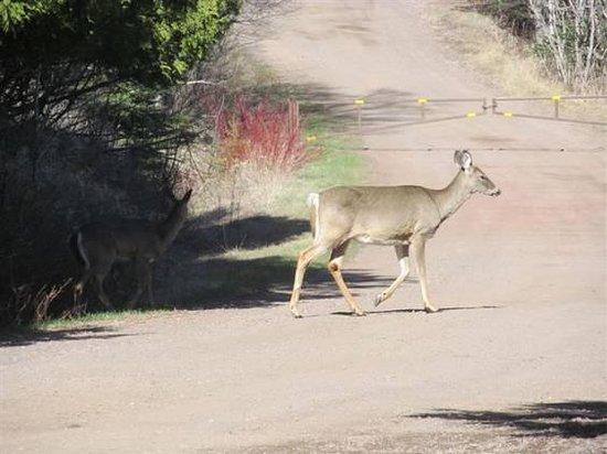 كاسكايد لودج أون ليك سوبيريور: Deer