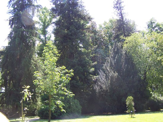 Orto Botanico di Lucca : orto botanico