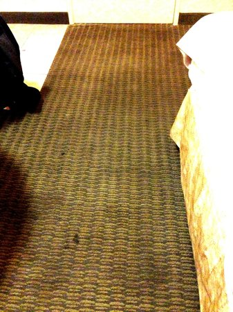 Days Inn & Suites - Sea World/Airport: The carpet as you walk into the room! If only you could smell it over the internet.