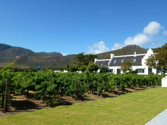 Steenberg Hotel: View of the vineyard with mountains behind