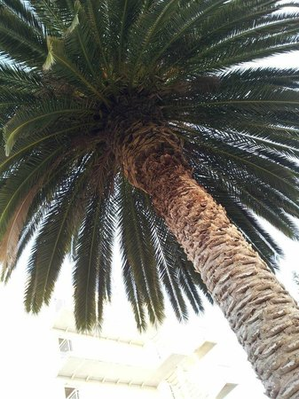 Family Life Kerkyra Golf: Palm tree in childrens playground!