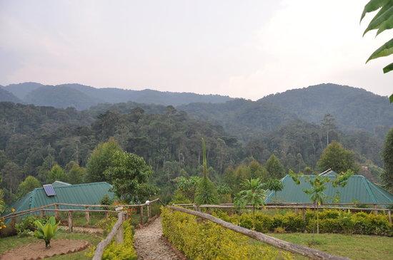 Gorilla Safari Lodge: vista del loge e della giungla