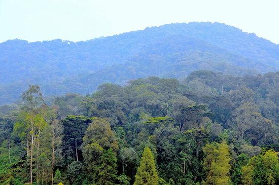 Gorilla Safari Lodge: tramonto sulla giungla