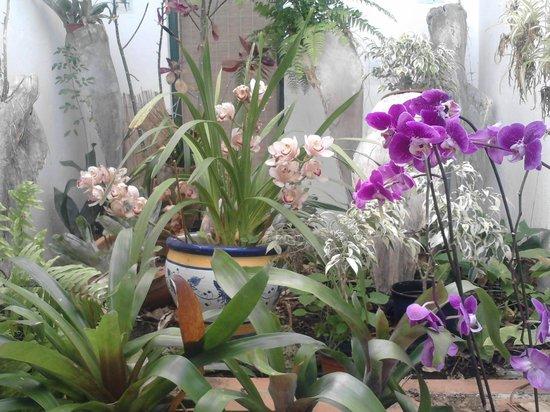 Orchid es picture of jardin de orquideas de sitio litre for Jardines de orquideas