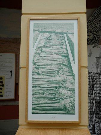 Corlea Trackway Visitor Centre: Part of the exhibit