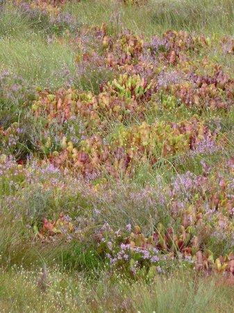 Corlea Trackway Visitor Centre: Bog plants