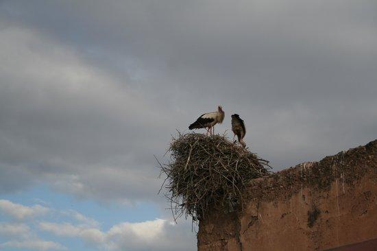 Riad Aladdin: Las cigüeñas