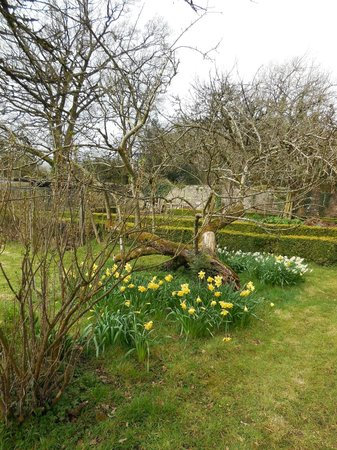 Mornington House: Antique blooming apple tree
