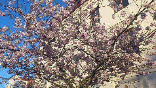 Babbel, tree on outdoor terrace