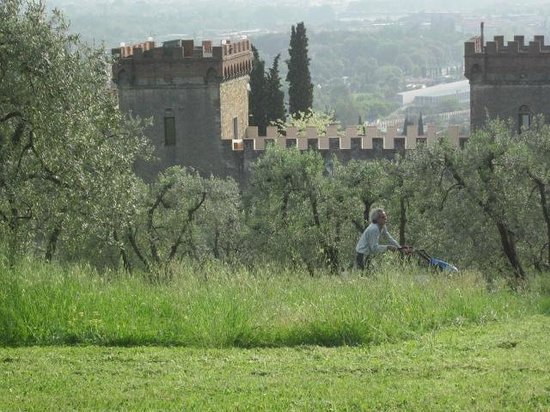 A Casa di Olivo: View from the olive orchard
