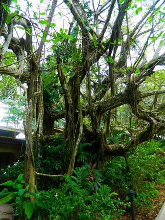 DoceLunas Hotel, Restaurant & Spa: cool tree on property