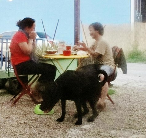 Rio's Brazilian Cafe: Dogs welcome