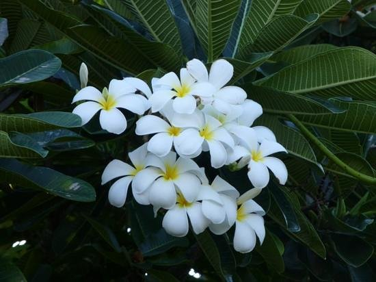 Mantra Frangipani Broome: Add a caption