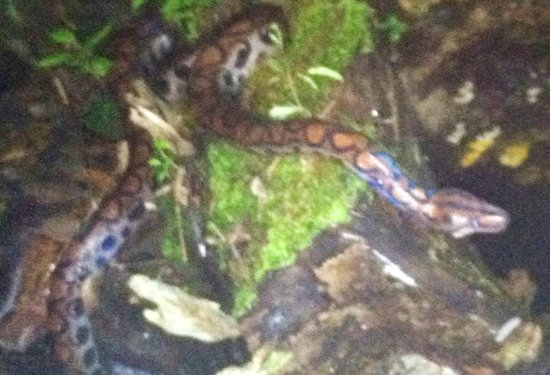Amaru Spirit : The Boa we saw,  pity about the quality