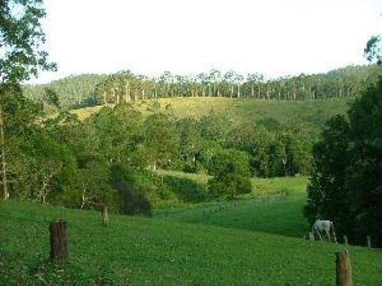 Bulahdelah, ออสเตรเลีย: Peacehaven Country Cottages. Views of the beautiful property