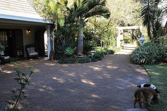 Gateway Country Lodge: Our dogs having fun