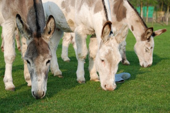 The Donkey Sanctuary Leeds
