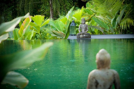 Oxygen Jungle Villas : The infinity pool in the jungle.