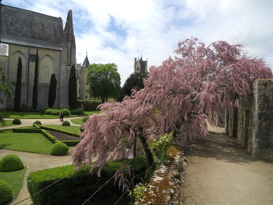 Chateau de Montreuil-Bellay : Tamarisk tree and inner courtyard