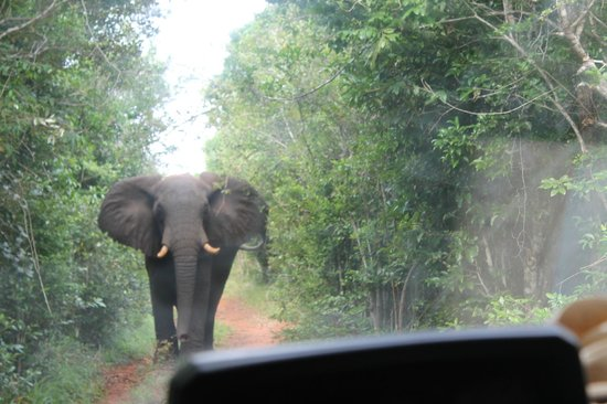 Mwamba Centre: Forest Elephant