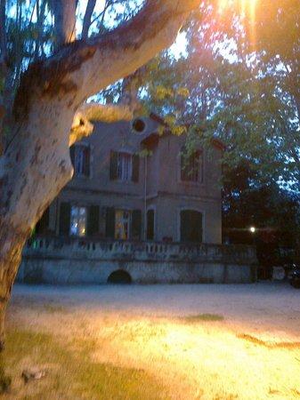 Auberge de la Treille : I platani