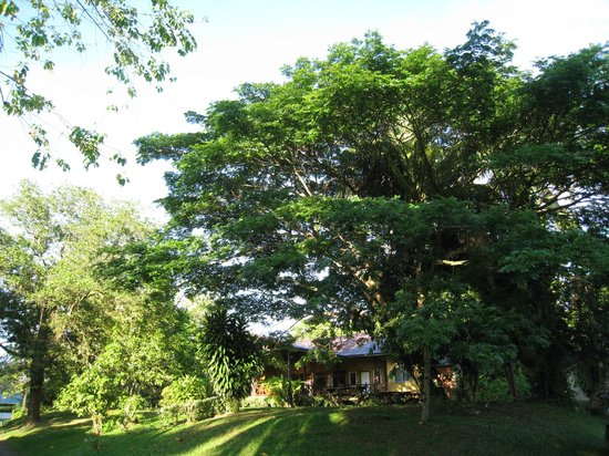 Sepilok B&B: Big shady trees outside First Lodge