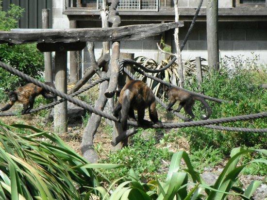 Willowbank Wildlife Reserve: Willowbank