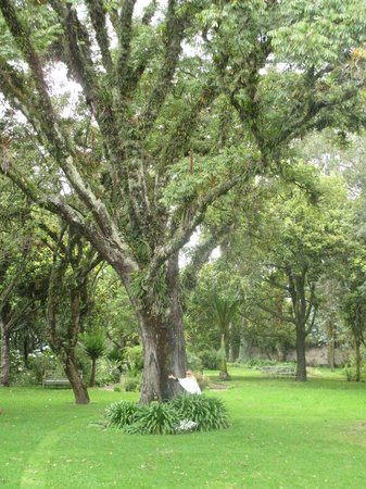 Hacienda Cusin: Centuries old Tree