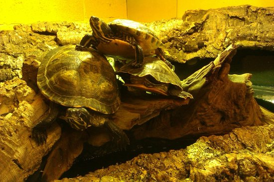 Wookey Hole Magical Mirror Maze: Lovely little turtles