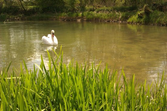 Wookey Hole Magical Mirror Maze: Swan