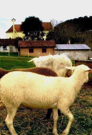Caminhos de Pedra: Fazenda das Ovelhas