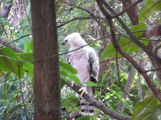 Fairmont Zimbali Lodge: Crested Eagle in grounds