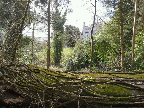 Slieve Bloom Bar: A beautiful view of Kinnitty castel from the surrounding forest.