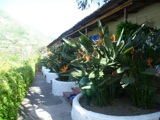 Hotel Parco Maria Terme: fioritura fuoi dalla camera